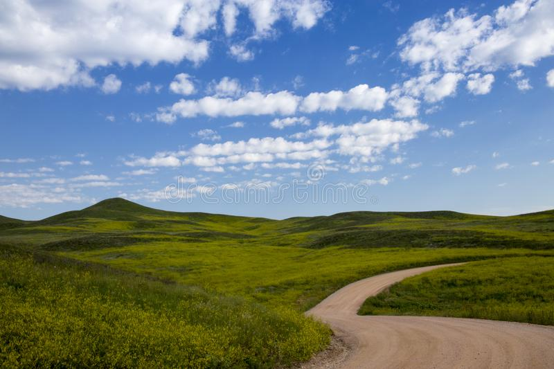 Green Rolling Hills in Custer State Park, South Dakota royalty free stock images