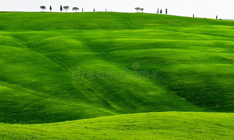 Green Rolling hills Spring In Tuscany Italy stock image