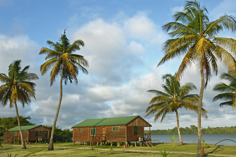 Download Green roof stock photo. Image of wood, palm, resort, africa - 12441414