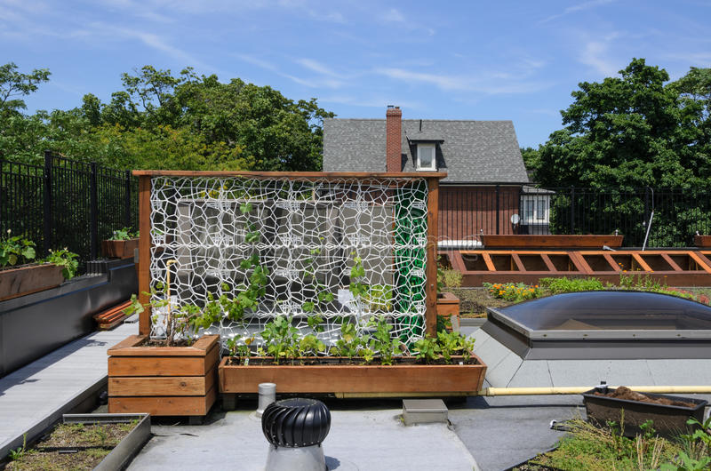 Green Roof stock images