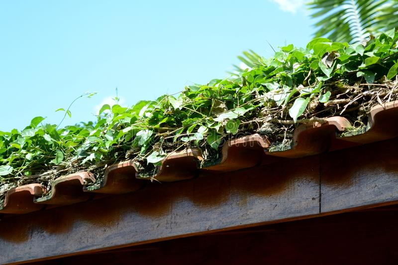 Green rooftop royalty free stock photos