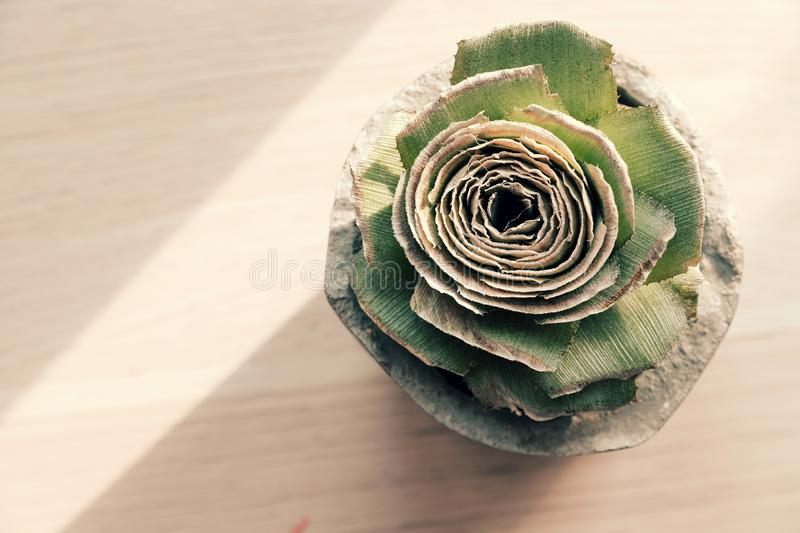 A green rose from pineapple stalk in handmade cement pot on white background. A green rose from pineapple stalk in handmade cement pot with oblique shadow on stock photography
