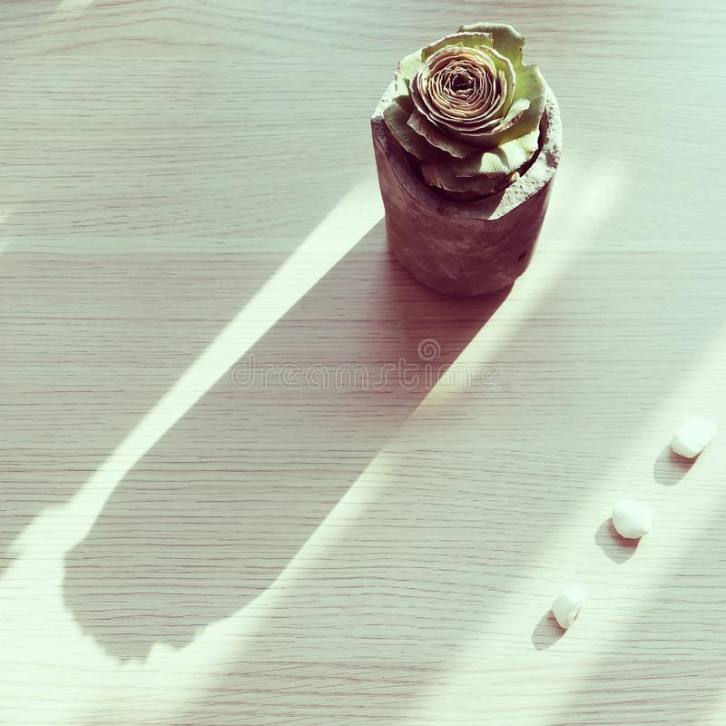 A green rose from pineapple stalk in handmade cement pot on white background. A green rose from pineapple stalk in handmade cement pot with oblique shadow on royalty free stock photography