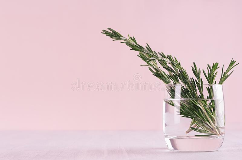 Green rosemary twigs in glass vase on soft pink pastel background. royalty free stock photo
