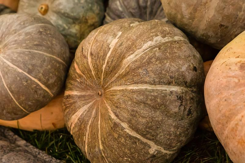 Green round pumpkin background vegetable base crop autumn pattern many vegetables royalty free stock photos