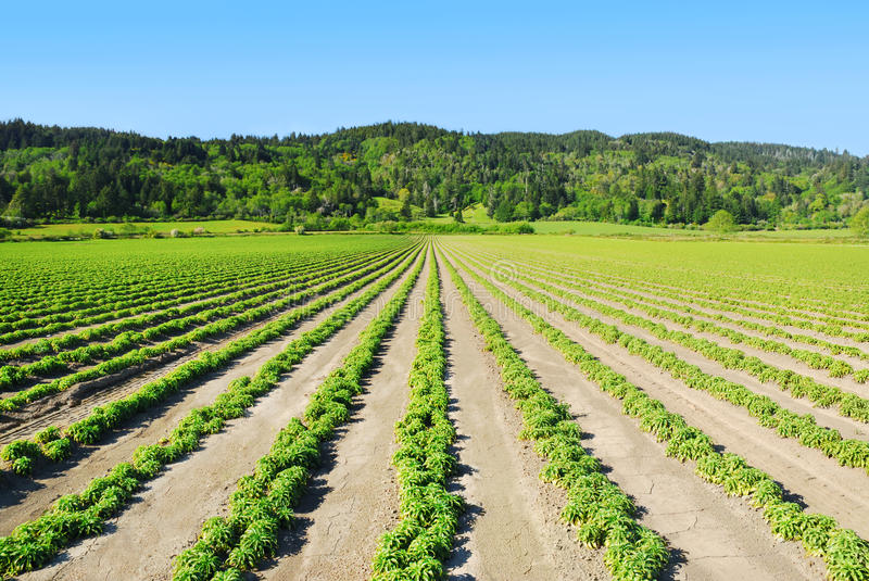 Download Green Rows stock photo. Image of agriculture, crop, country - 22366086