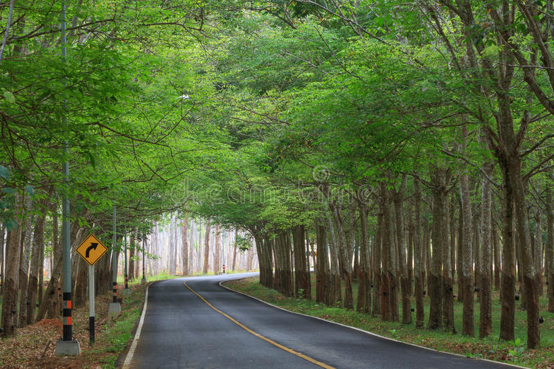 Green rubber trees tunnel on the road with traffic signs. Green rubber tree tunnel on the road with traffic signs, turn right royalty free stock photography