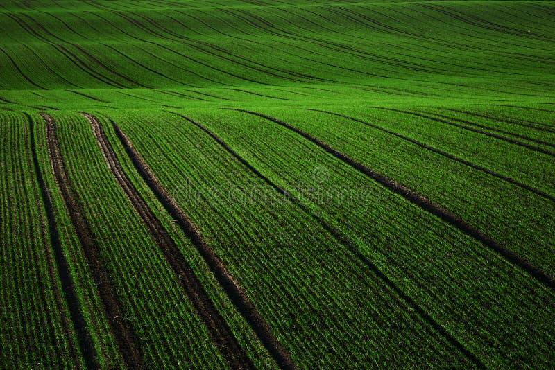 Green rug stock image