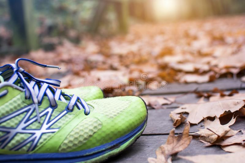 Green runner shoe in the fall leaves on the ground in the forest in autumn season stock photo