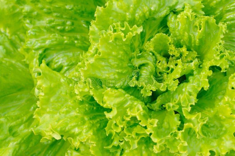 Download Green salad stock image. Image of healthcare, freshness - 13148475