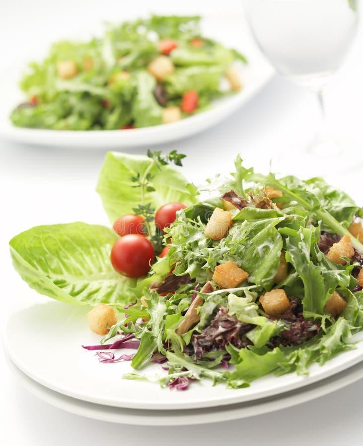 Green Salad Stock Image