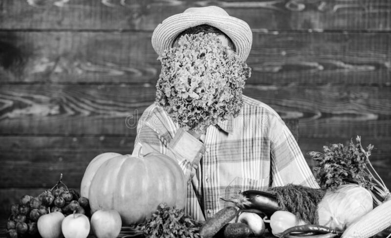 Green salad. harvest festival. bearded mature farmer. organic and natural food. halloween. seasonal vitamin food. Useful stock photos