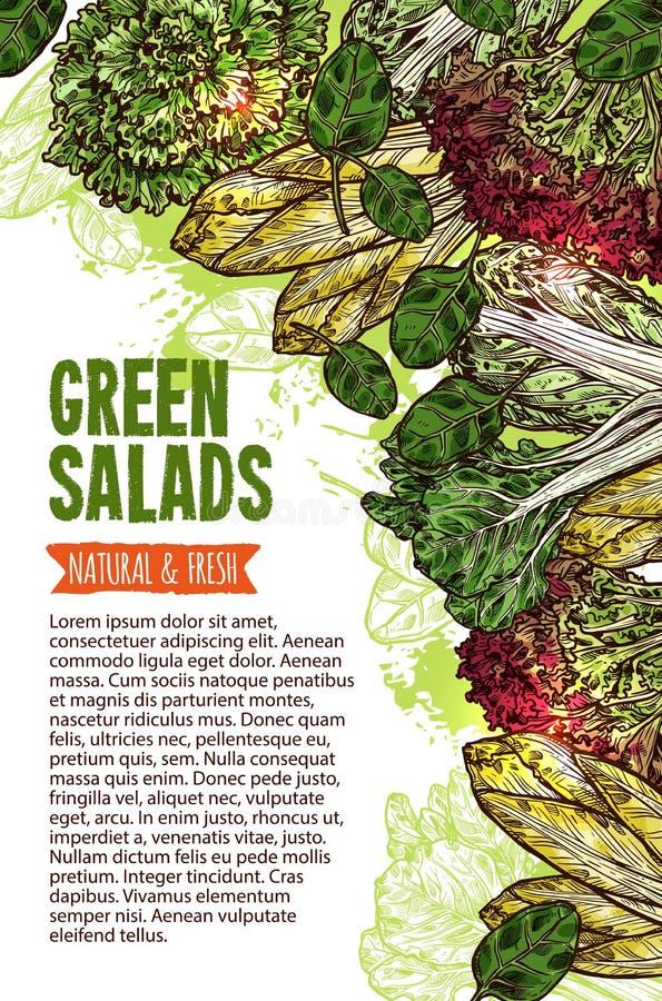 Green salad sketch banner of fresh leaf vegetable royalty free illustration