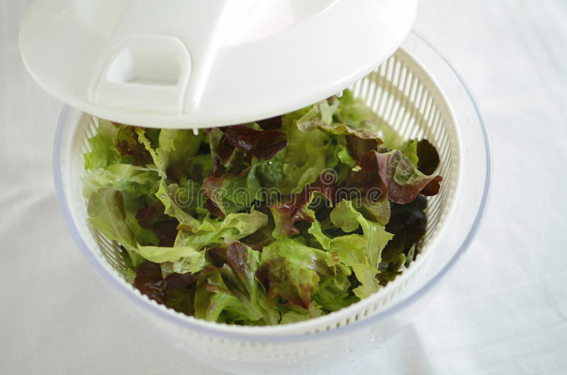 Green salad leaves in spinner. Green salad leaves being dried in a spinner on white background royalty free stock photos