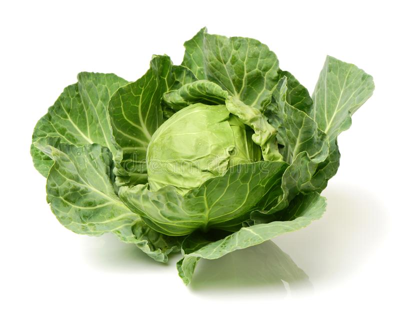 Green Savoy cabbage with reflection royalty free stock photos