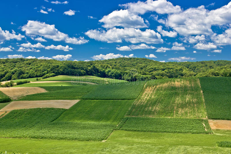 Green scenery landscape in spring time IV stock photography