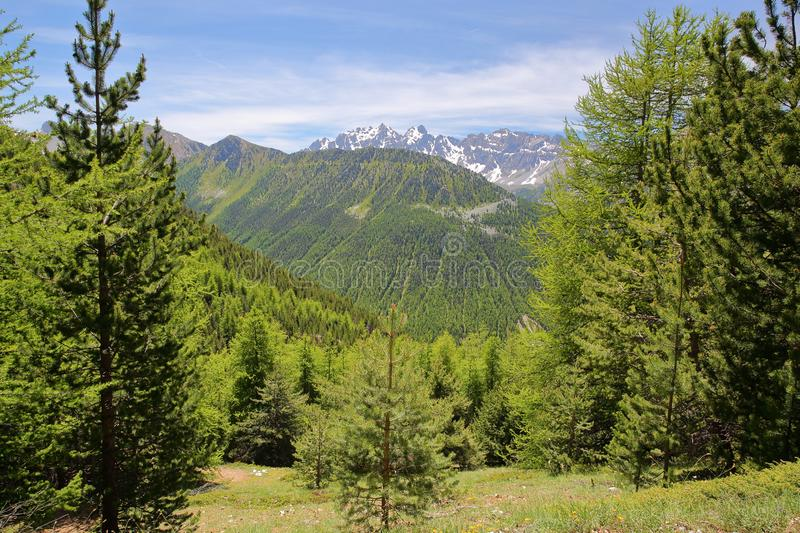 Green scenery with pine trees viewed from a hiking path  leading to Fromage Pass above Ceillac village. Queyras Regional Natural Park, Southern Alps, France royalty free stock photo