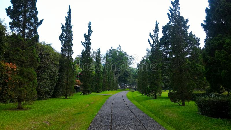 A pathway in the park, garden. Green scenery in a tropical park, summer, nature view, garden architecture, trees and plants, grasses, pine trees stock photos