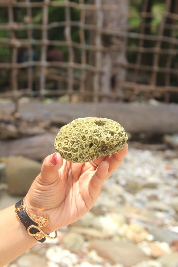 Green Sea coral. stock photos