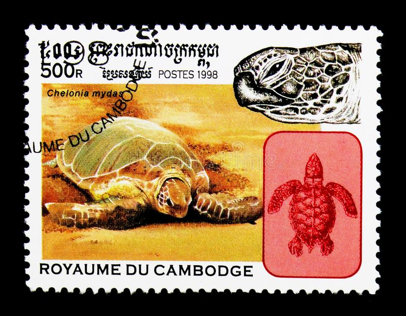 Green Sea Turtle Chelonia mydas, Turtles serie, circa 1998. MOSCOW, RUSSIA - NOVEMBER 24, 2017: A stamp printed in Cambodia shows Green Sea Turtle Chelonia mydas royalty free stock images