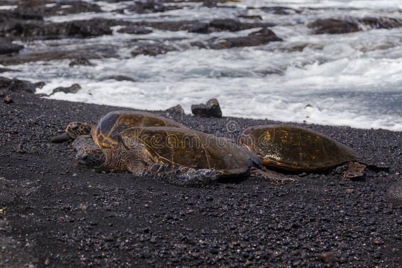 Green sea turtles (Big Island Hawaii)