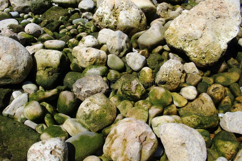 Green sea water stones and rocks resting on seashore. Green sea water stones and rocks on seashore, organic, abstract, background, beach, brown, closeup, fresh stock photo