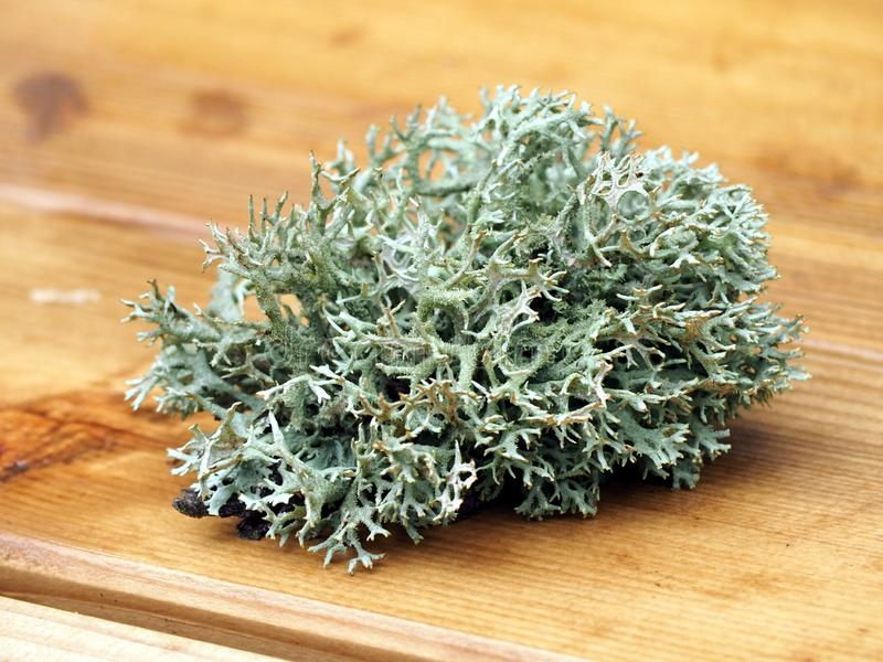 Green Sea Weed stock images