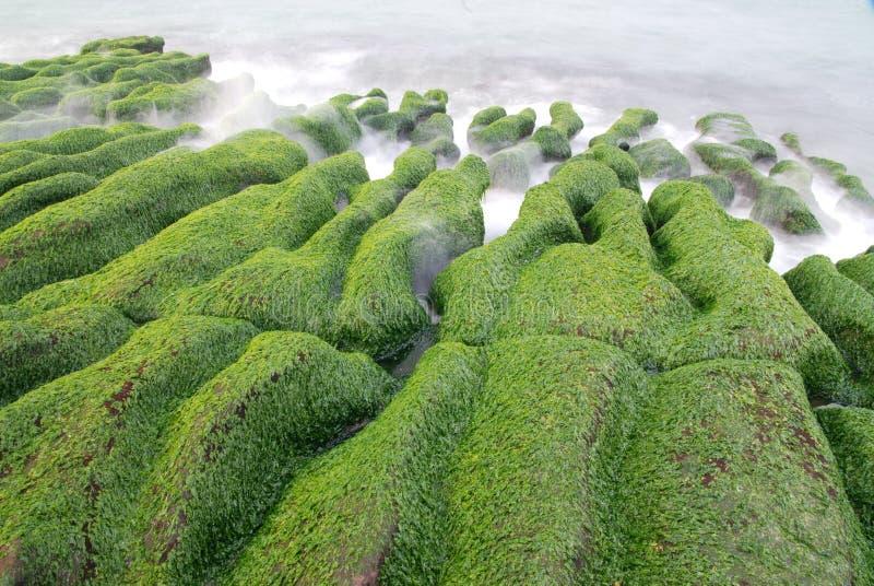 Download Green seaweed coastline. stock photo. Image of deep, blue - 13547208
