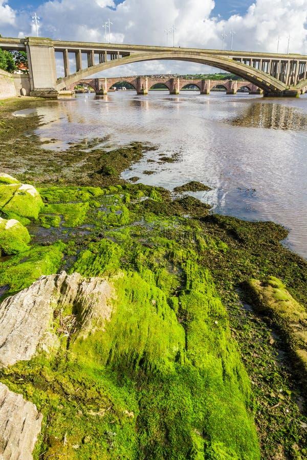 Green seaweed under bridges stock photos
