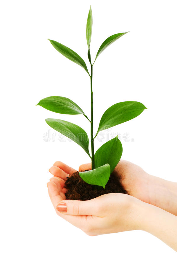 Download Green seedling stock image. Image of cultivated, concepts - 10537113