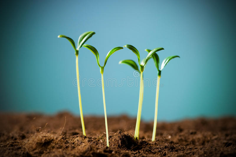 Green seedling. Illustrating concept of new life stock photo