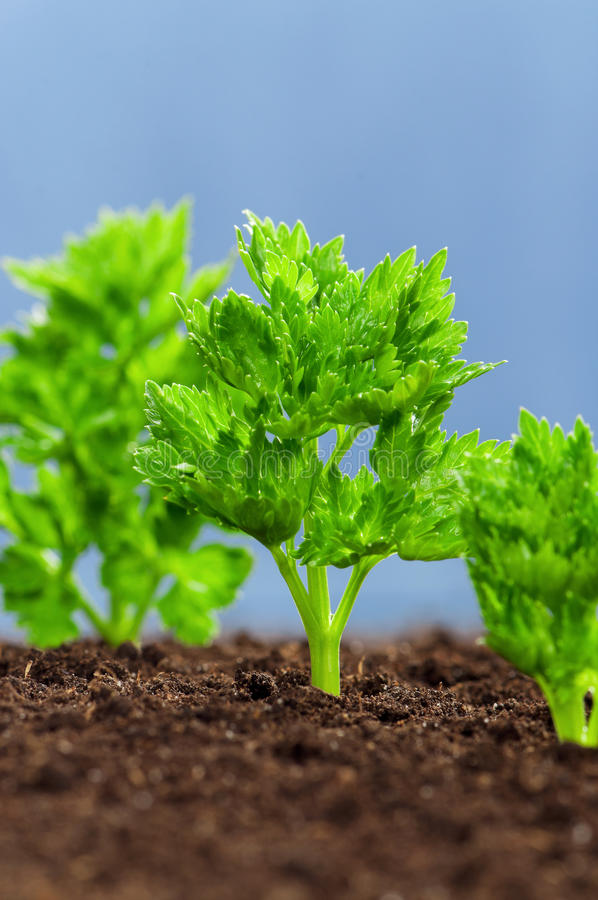Download Green seedling stock image. Image of earth, land, agriculture - 22905777