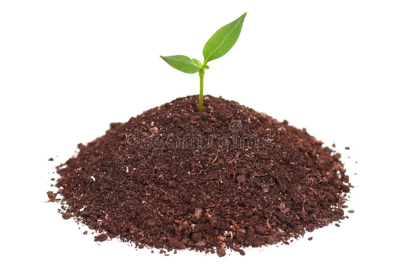 Download Green seedling stock photo. Image of close, fresh, cultivated - 26828066