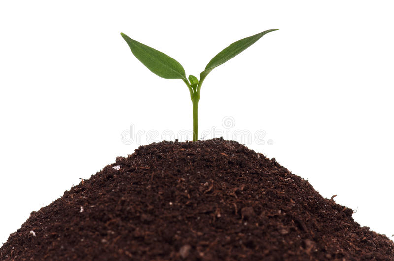 Download Green seedling stock photo. Image of agriculture, hope - 27008406