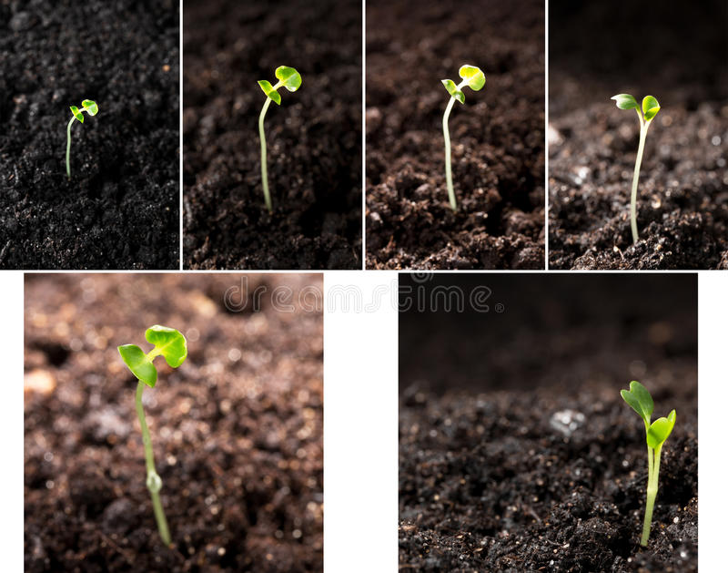 Green seedling illustrating concept of new life. Collage green seedling illustrating concept of new life royalty free stock photo