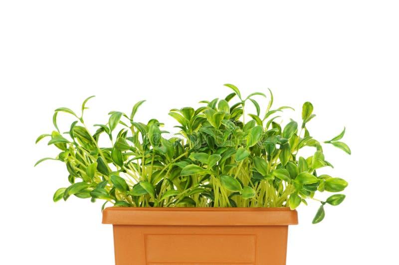 Green seedlings growing stock photography