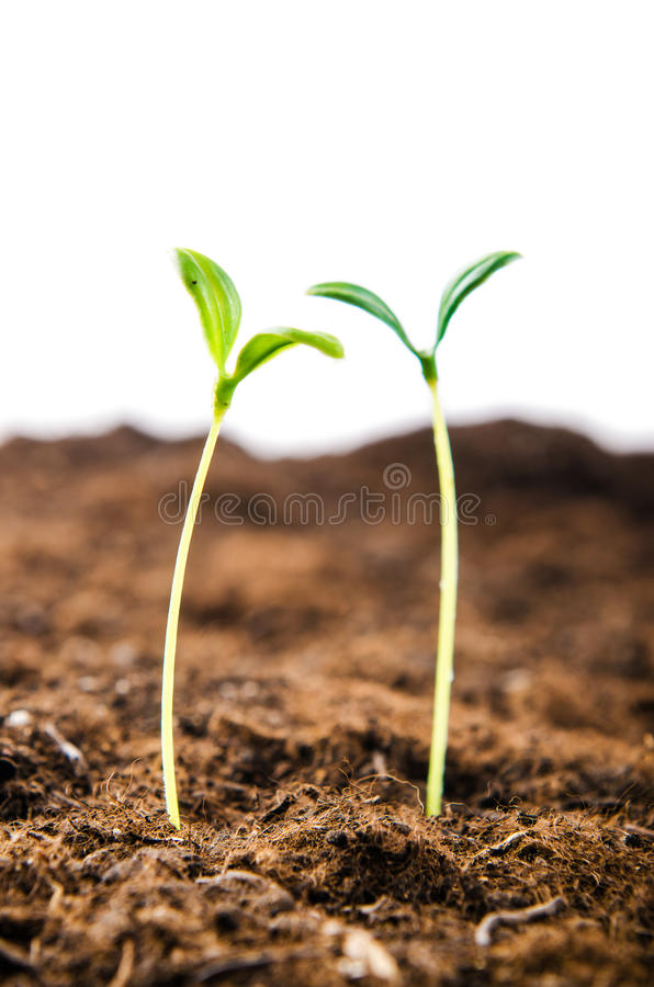 Download Green Seedlings In New Life Royalty Free Stock Images - Image: 28418119