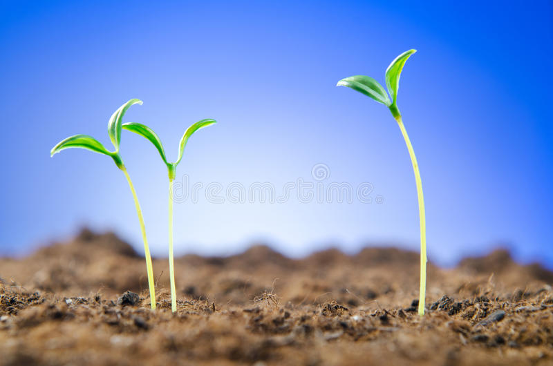 Green seedlings - new life concept royalty free stock photos