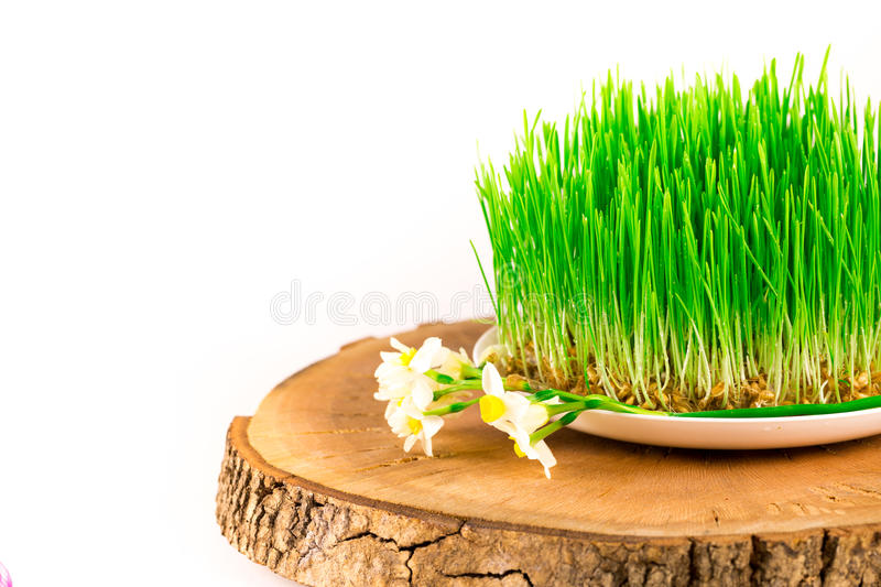 Green semeni on wooden stump, decorated with tiny daffodils royalty free stock image