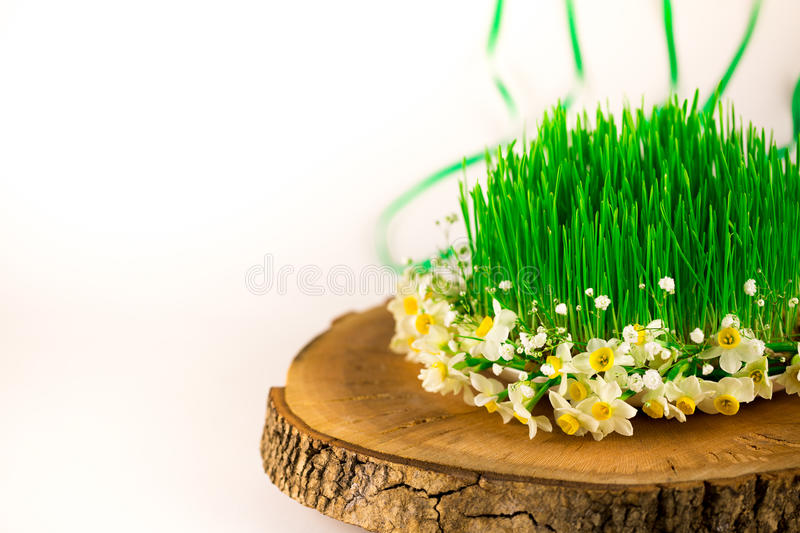 Green semeni on wooden stump, decorated with tiny daffodils royalty free stock photography