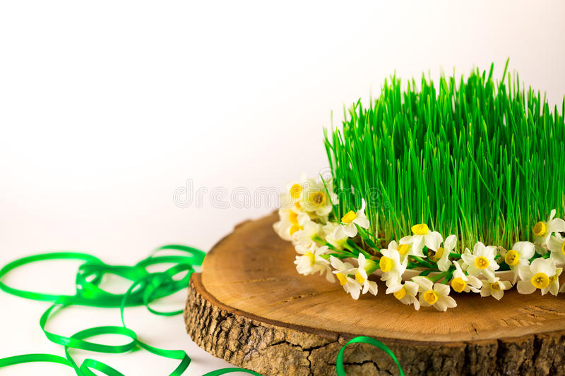 Green semeni on wooden stump, decorated with tiny daffodils royalty free stock photos