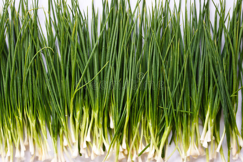 Green Shallot royalty free stock images