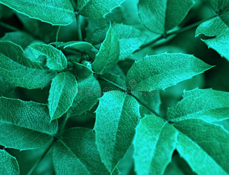 Green sharp leaf stock photos