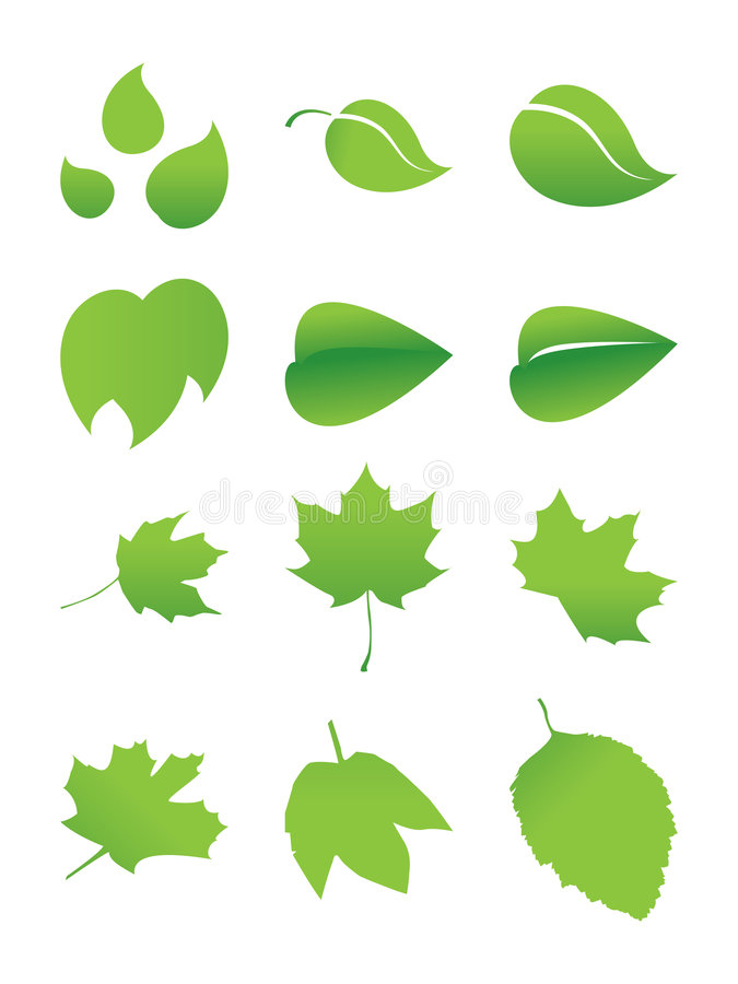 Download Green sheet stock vector. Illustration of autumn, sprout - 3035341