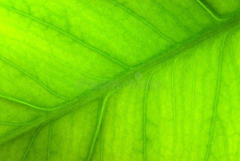 Green sheet background.shallow dof.  stock photo