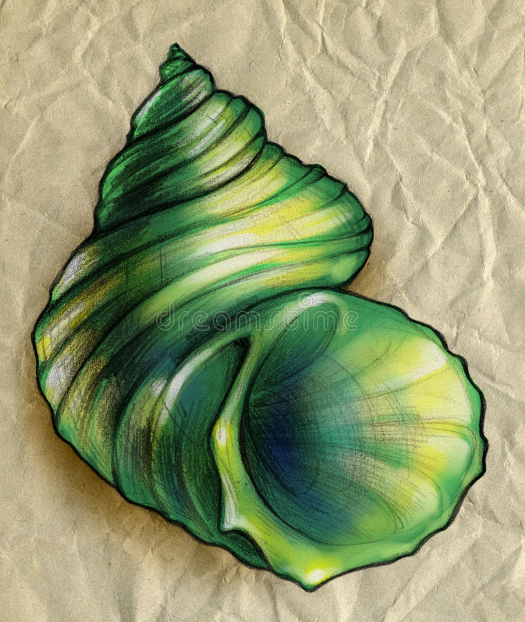 Green shell close up sketch royalty free stock photography