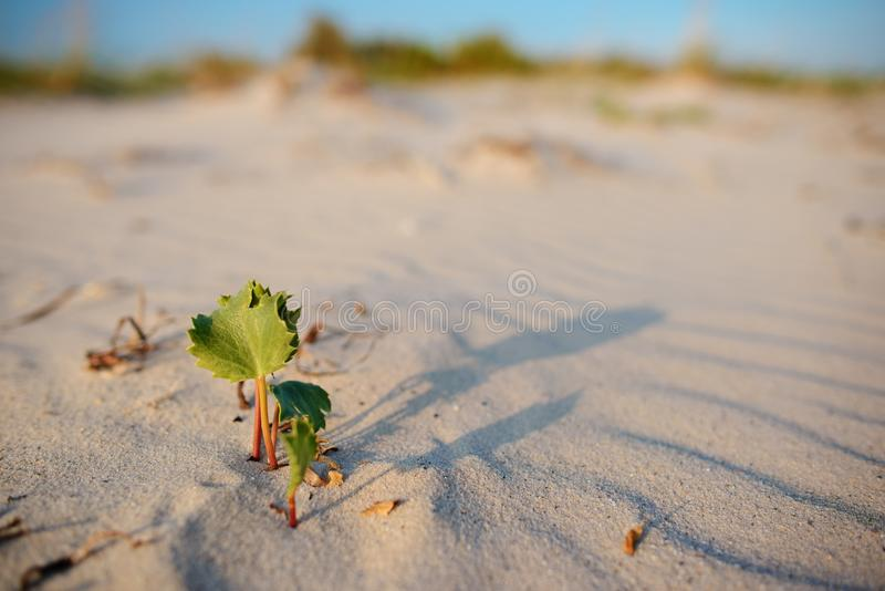 Green shoot in the desert - conceptual photo for growth in adverse conditions.  stock image