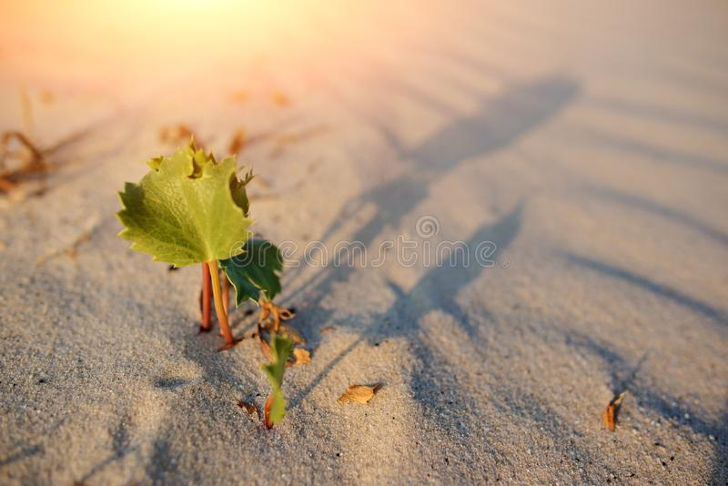 Green shoot in the desert - conceptual photo for growth in adverse conditions.  stock photos