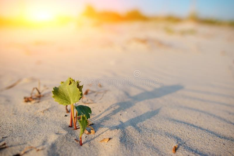 Green shoot in the desert - conceptual photo for growth in adverse conditions.  royalty free stock photography