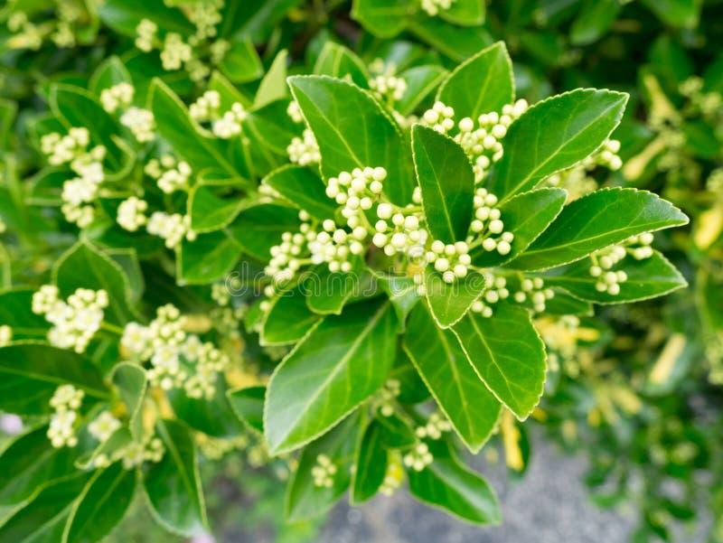 Green Shrub Leaves royalty free stock photos